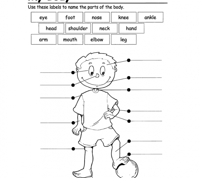 Body clipart labelling. Endearing label parts worksheet
