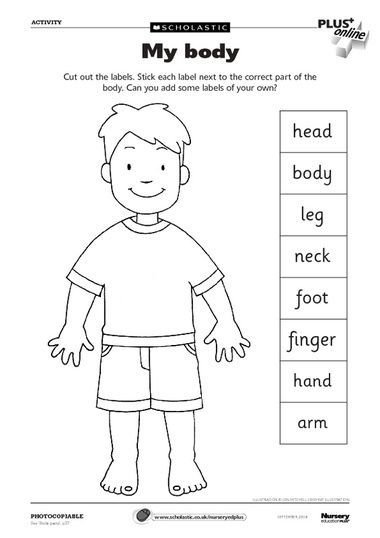 Body clipart labelling. Parts worksheet can use