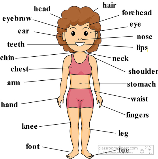 Photos human labeled for. Body clipart labelling