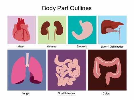 . Body clipart organ