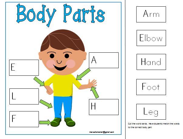 Body Clipart Preschool Picture 110581 Body Clipart Preschool