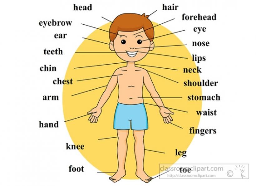 Body clipart preschool.  parts clip art