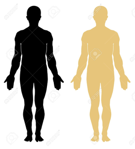 Human outline free images. Body clipart public