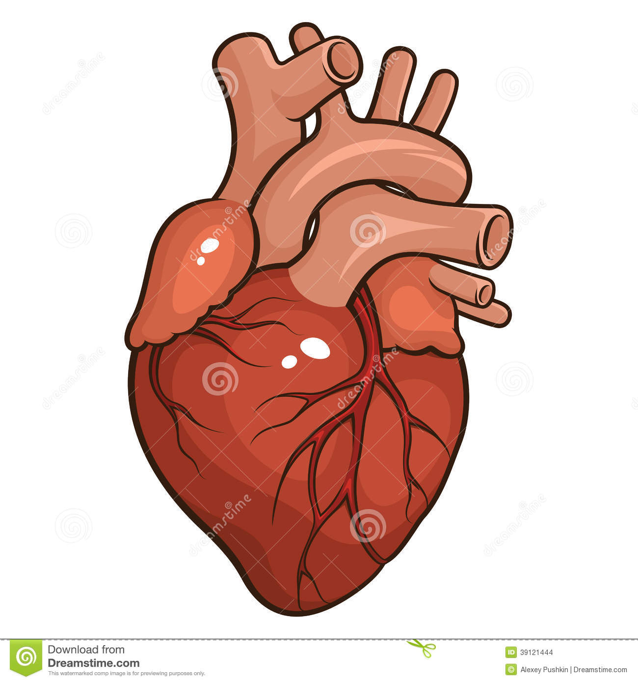 Body clipart simple human. Heart drawing images at