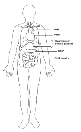 Body clipart simple human. Diagram medical lungs heart