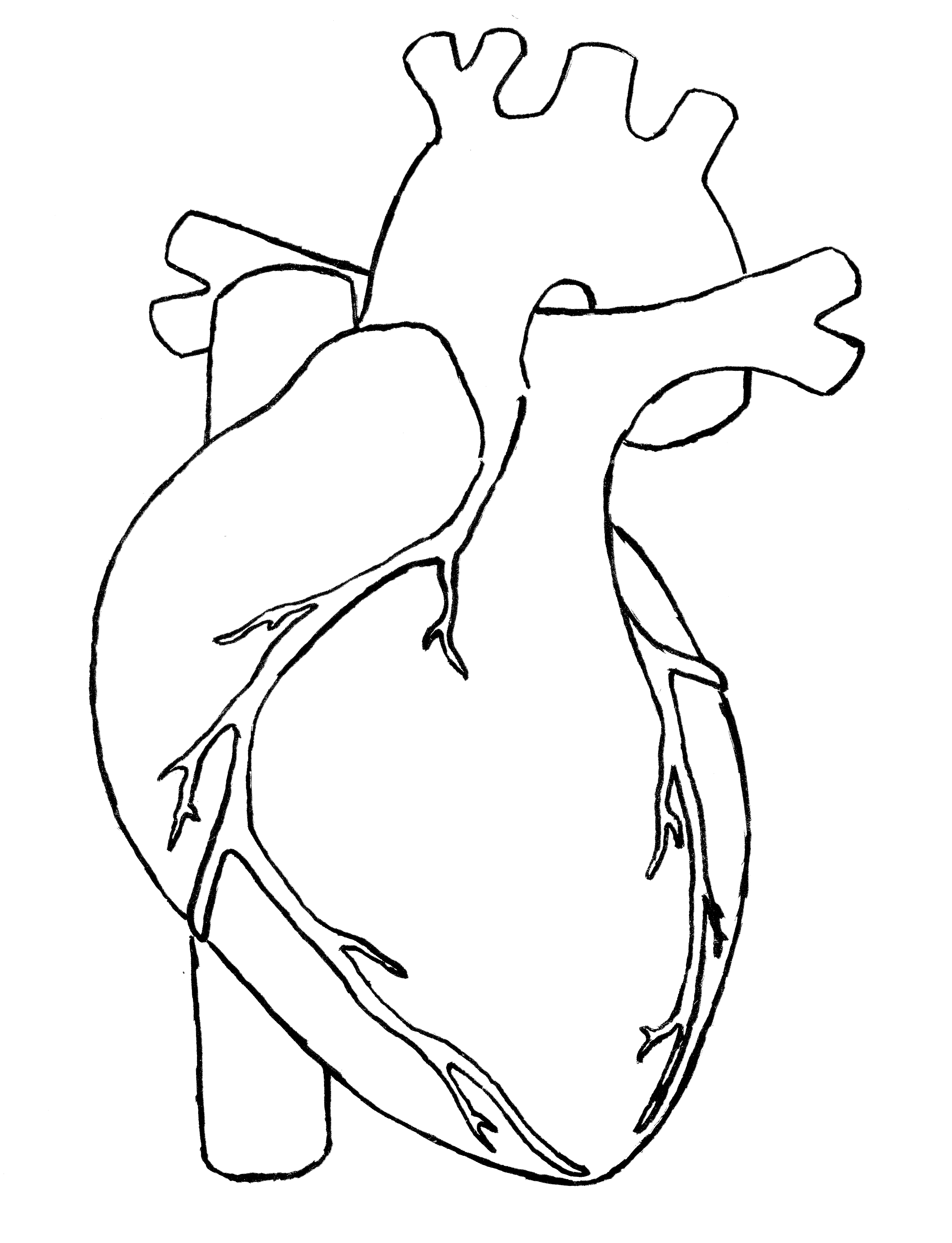 Heart diagram png clipground. Body clipart simple human
