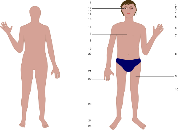 Human clip art at. Body clipart skin