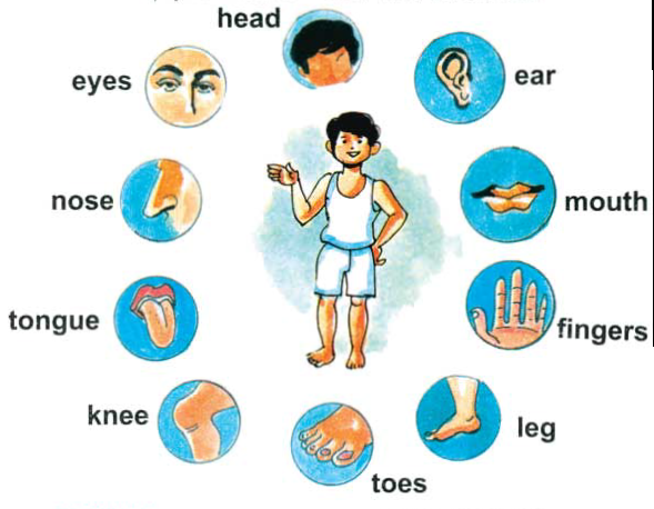 Learning pictures for toddlers. Body clipart toddler