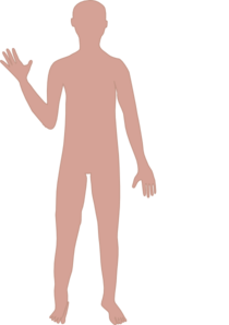 Body clipart transparent. Male clip art at