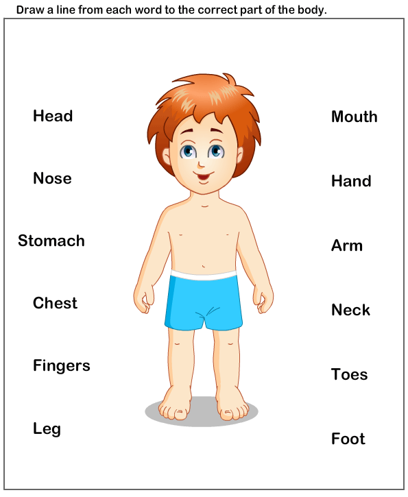Science worksheets preschool parts. Body clipart worksheet