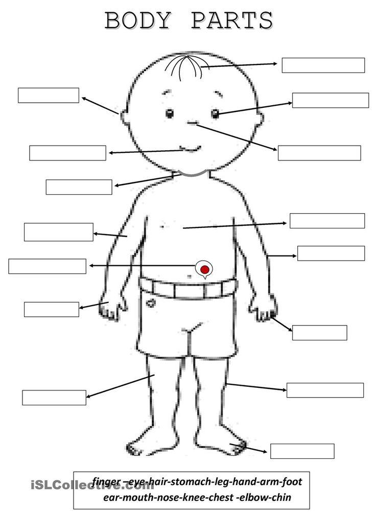 best parts images. Body clipart worksheet
