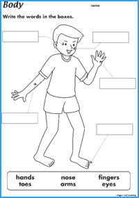 Parts maple leaf learning. Body clipart worksheet