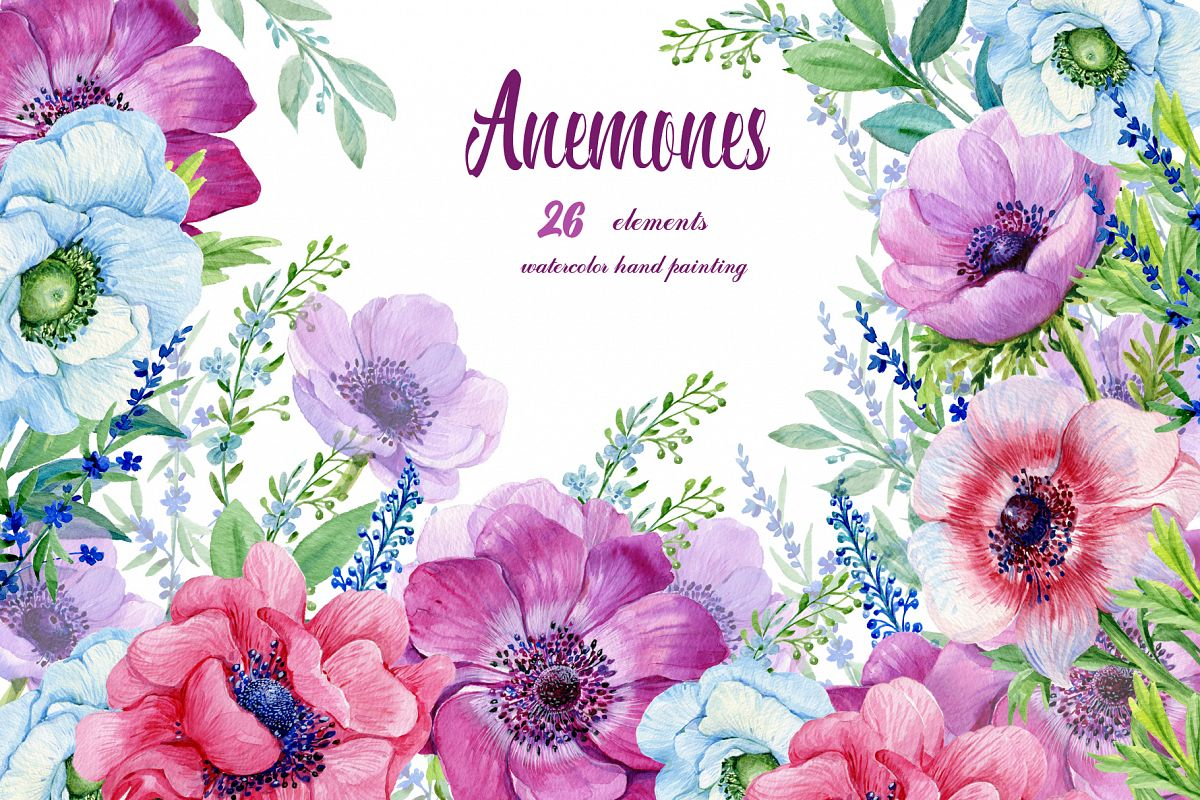 Boho clipart watercolor. Anemones flowers purple floral
