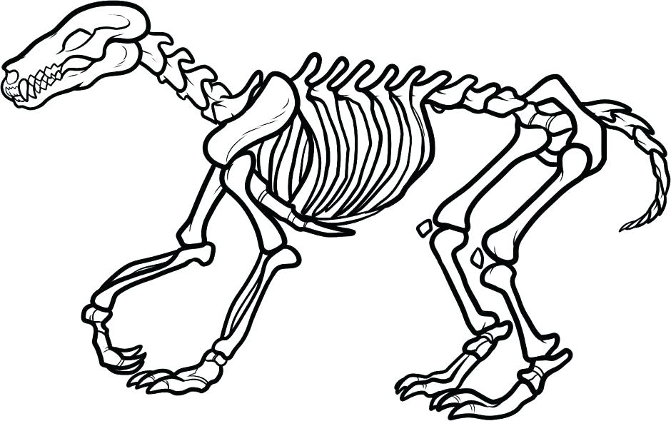 Bone clipart animal bone. Bones drawing at getdrawings