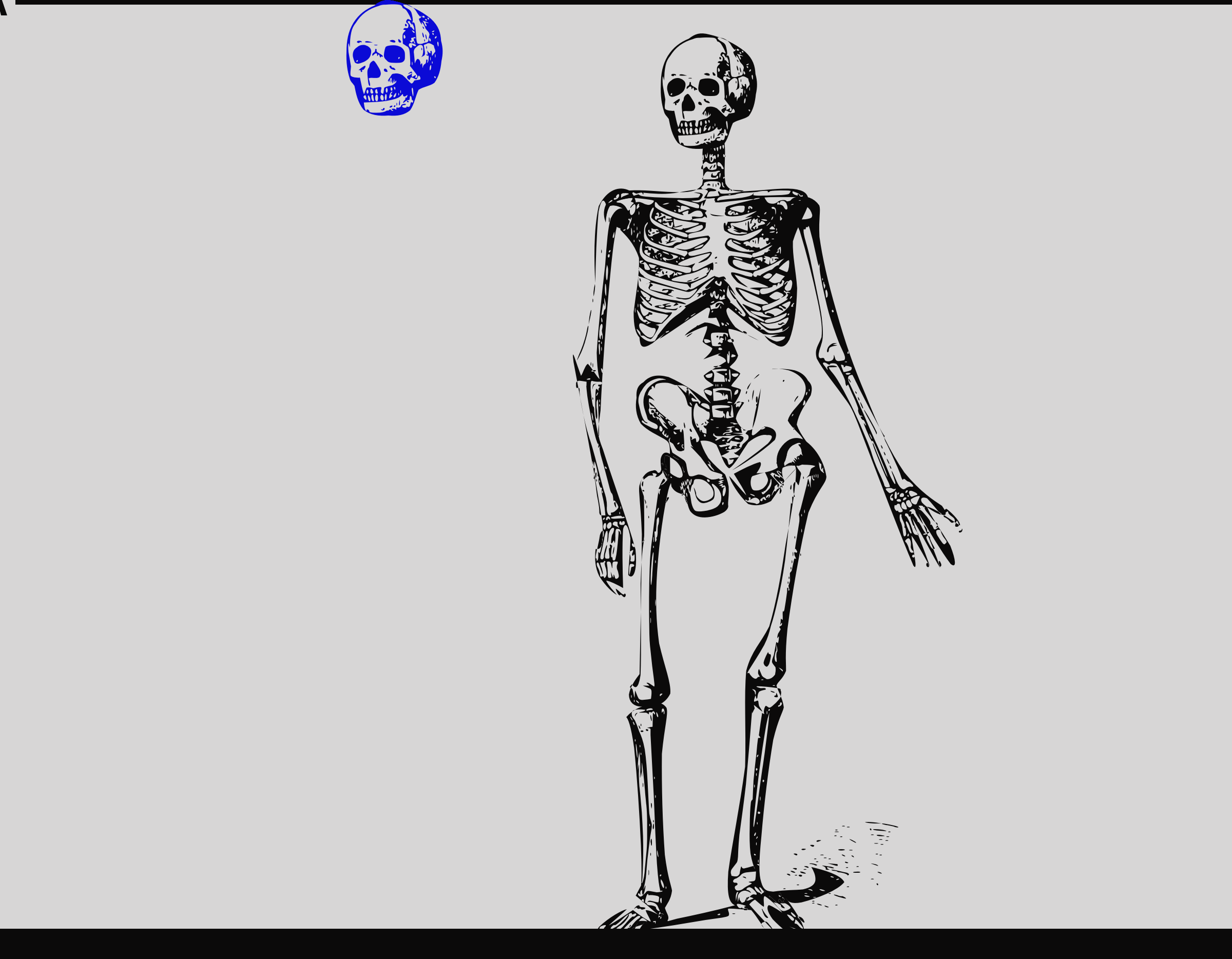 Bones. Bone clipart animated