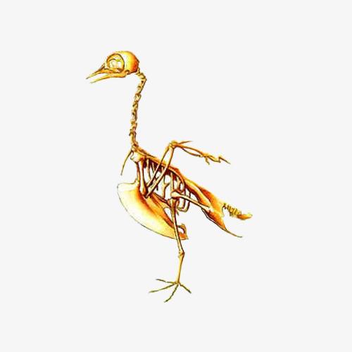 Bone clipart bird. Skeleton death png image