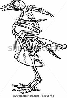 Skeleton of a etc. Bone clipart bird