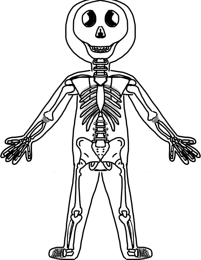 Special steam event human. Bone clipart body