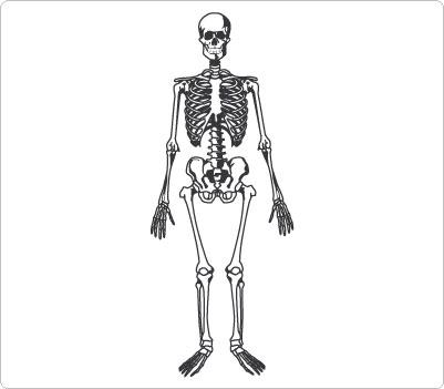 Bones clipart body. Free skeleton cliparts download