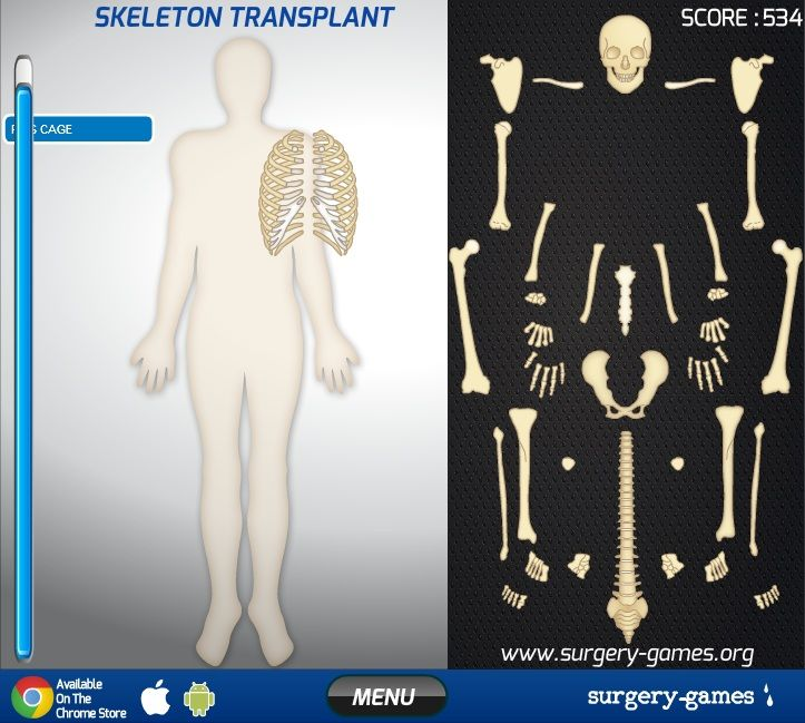 Anatomy games online tweetboard. Bone clipart human biology
