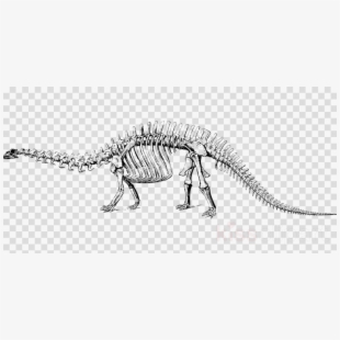 Bone clipart stegosaurus. Dinosaur bones clip art