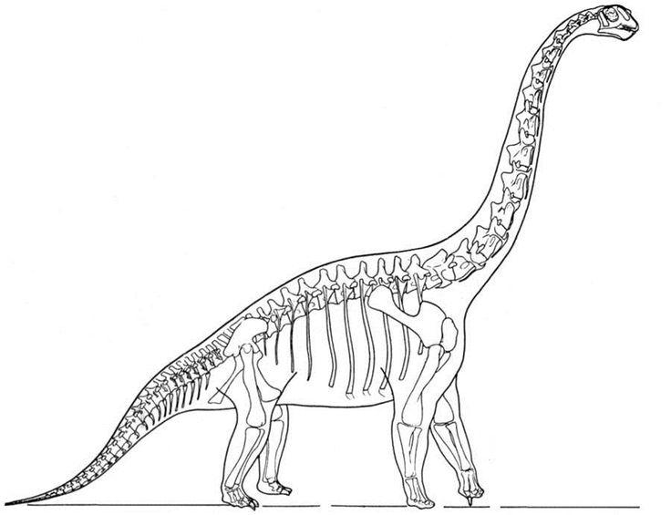 Bone clipart stegosaurus.  best dinosaurioak images
