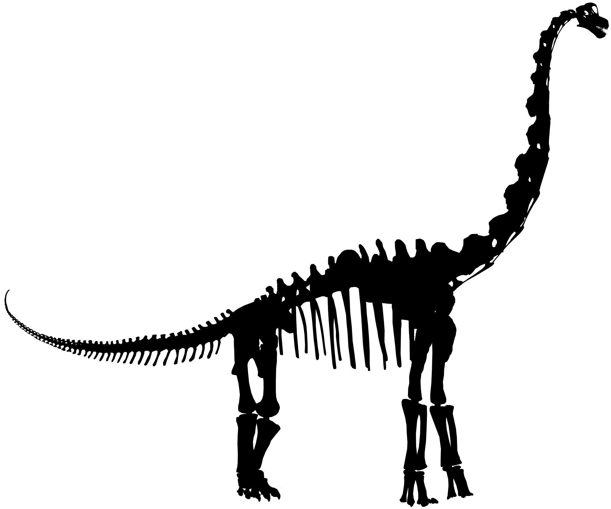 Dinosaur skeleton silhouette google. Bones clipart animal bone