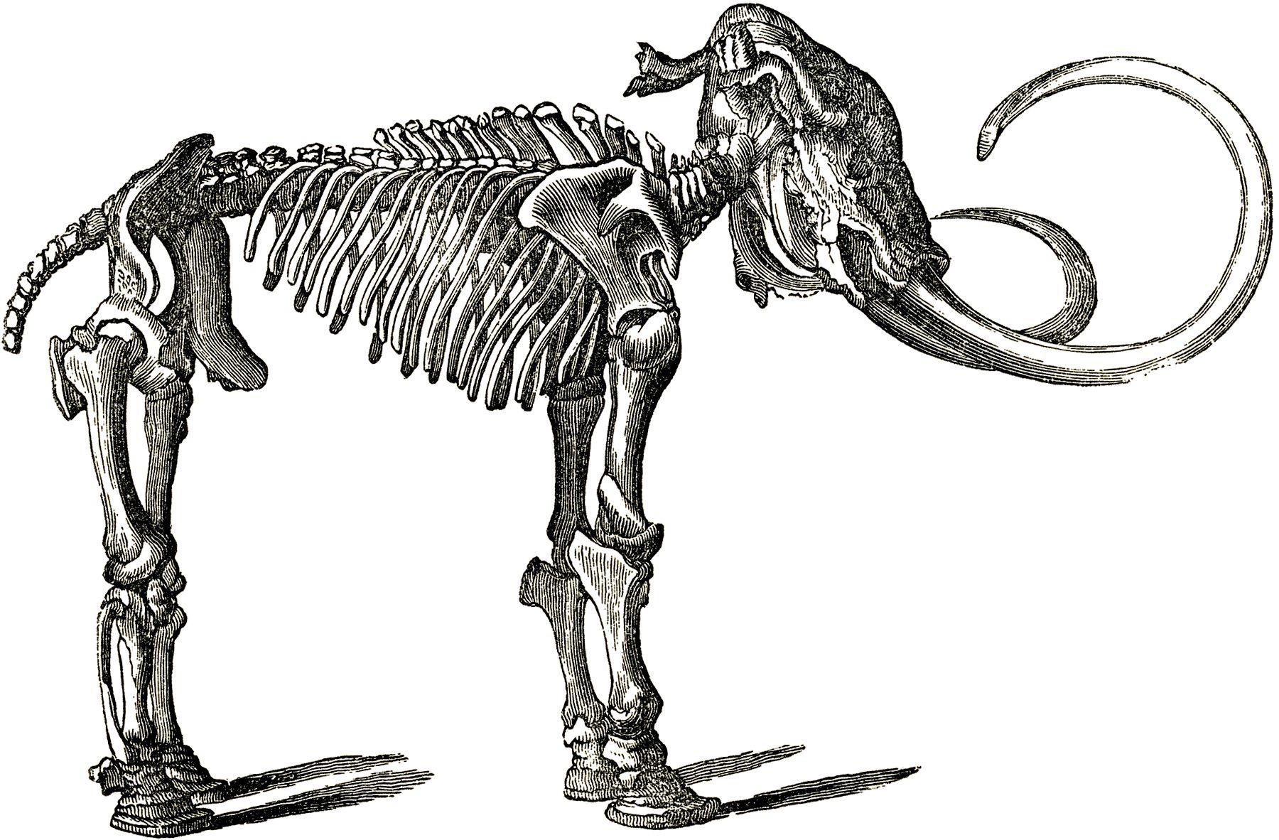 Free dinosaur clip art. Bones clipart animal bone