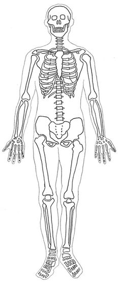 Bones clipart body. Skeleton outline with images