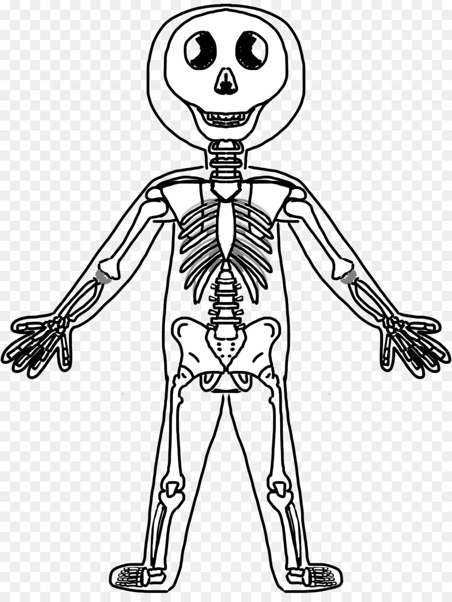 Human skeletal system drawing. Bone clipart body