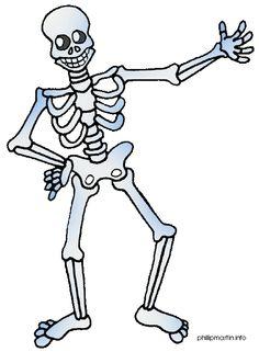 Bones clipart body. Skeleton simple human anatomy