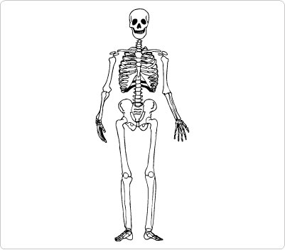 collection of free. Bone clipart body