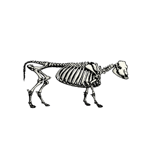 Skeleton cliparts of free. Bone clipart cow