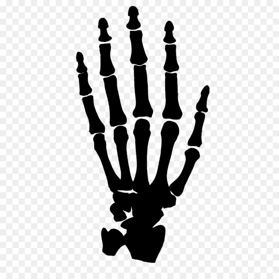 Bones clipart skeleton. Human hand clip art