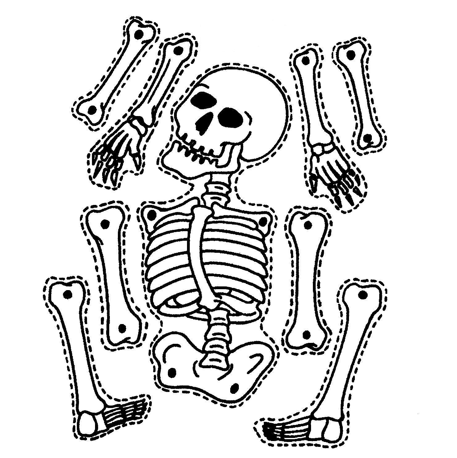 Skeletal hand drawing at. Bones clipart skeleton
