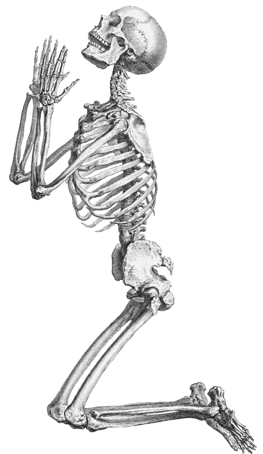 Bones clipart transparent background. Skeleton png images pluspng