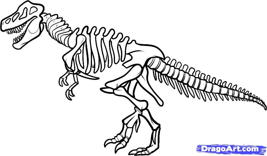 collection of dinosaur. Bones clipart trex