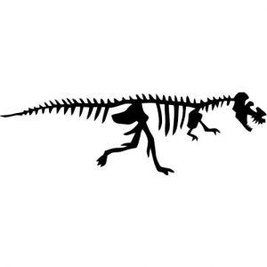 Dinosaur fossils panda free. Bones clipart trex