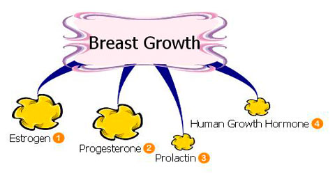 Natural breast growth . Boobs clipart enlarged