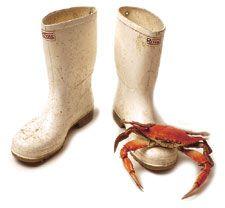 White and crab louisiana. Boots clipart shrimp