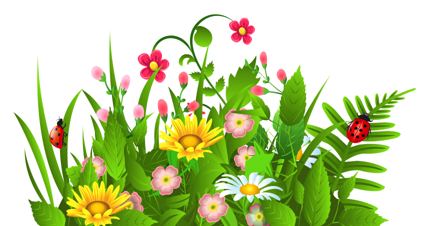 Poinsettias clipart accent. Flowers border spring