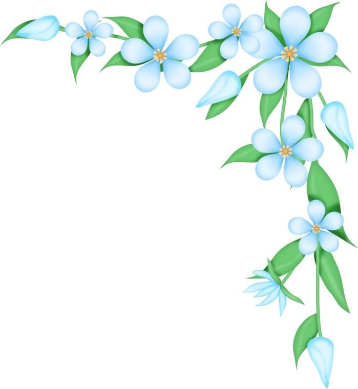 borders clipart flower borders flower transparent free for download