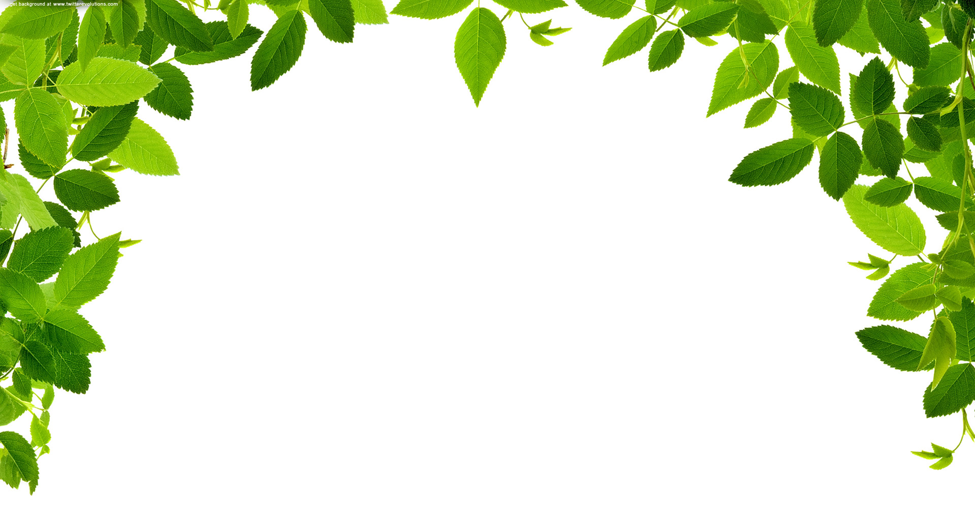 Free cliparts download clip. Clipart frame tree