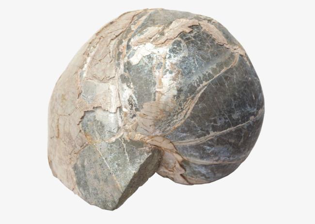 Irregular nature small rock. Boulder clipart round stone