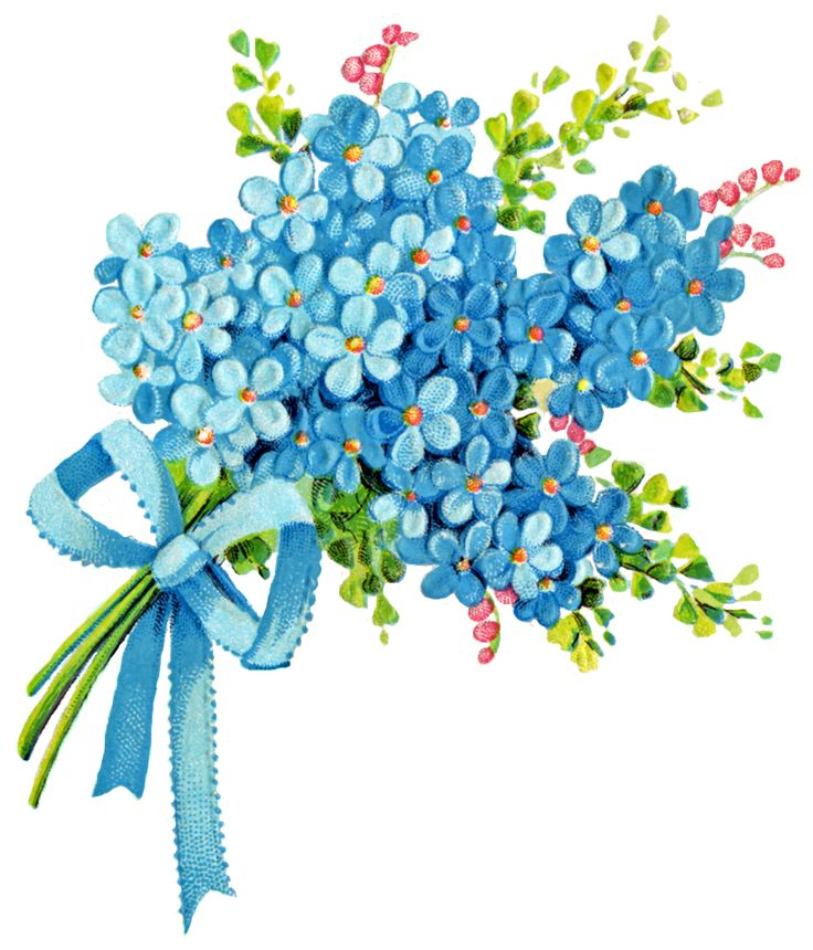Bouquet clipart blue.  best forget me
