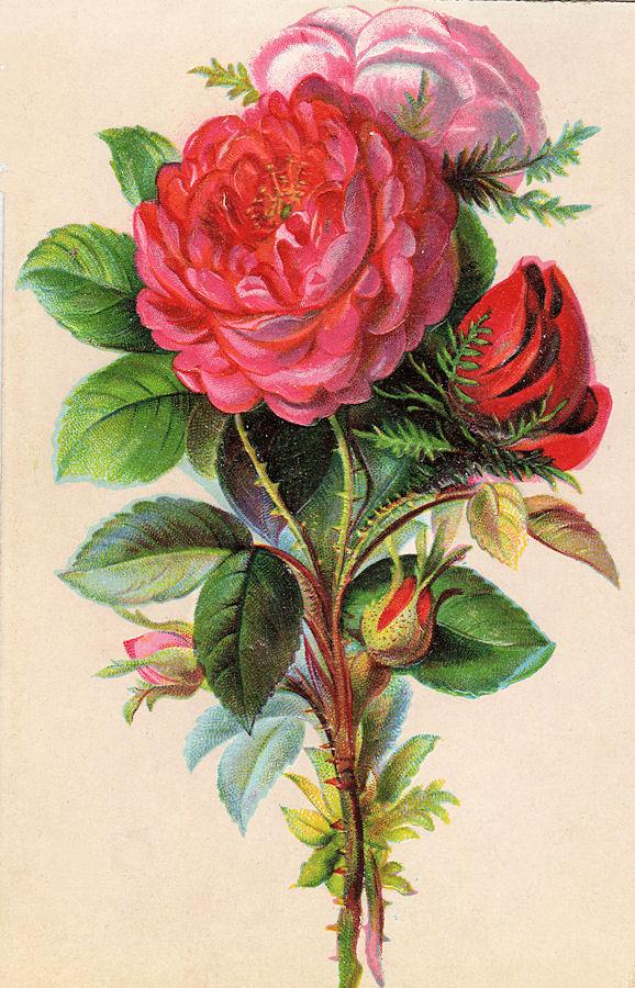 Bouquet clipart bouque. Free vintage clip art