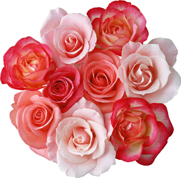 Roses gallery yopriceville high. Bouquet clipart bouquet rose