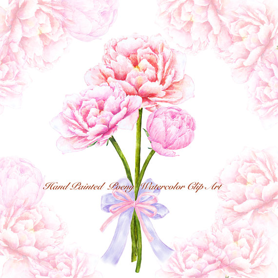 Bouquet clipart bow. Watercolor peony flower peonies