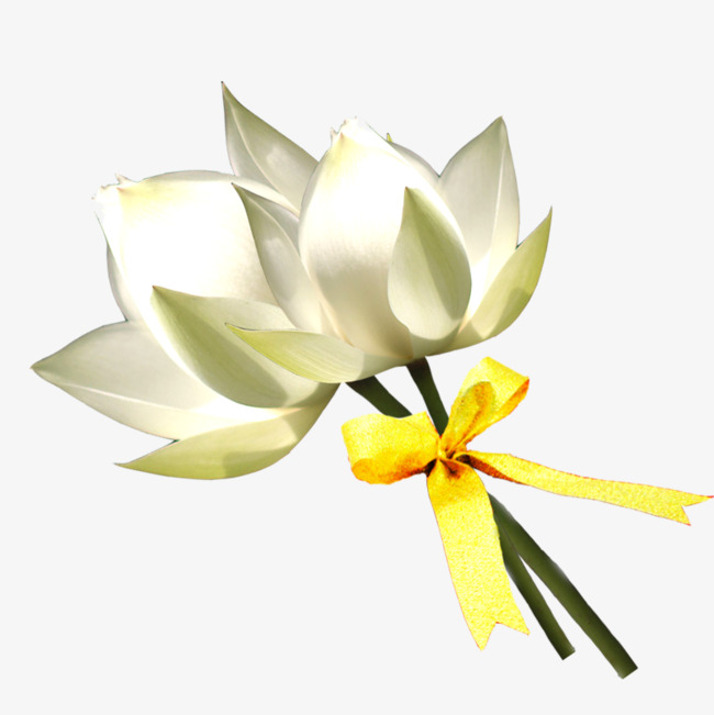 Hand painted lily png. Bouquet clipart bow