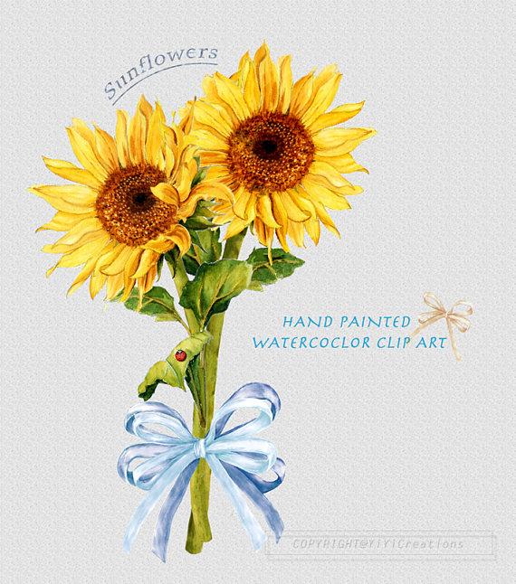 Bouquet clipart bow. Sunflower watercolor summer flower
